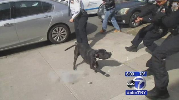 [Watch] Police Let Dog Out of Home, Then Shoot at it in a Crowd of People