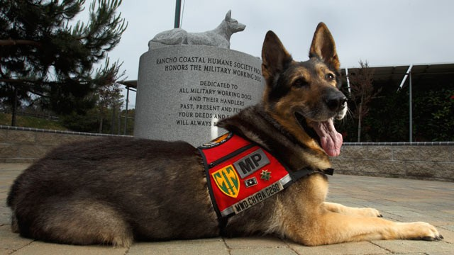 Troops BETRAYED As Army Dumps Hundreds Of War Dogs
