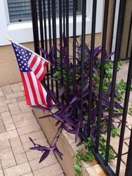 Veteran Homeowner Threatened With $8,000 in Fines and Foreclosure Over an American Flag in a Flower Pot