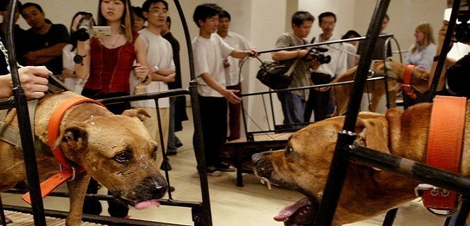 Taxpayer Funded $300,000 'Art' Exhibit of Pit Bulls Trying to Fight, Draws Outrage (Video)