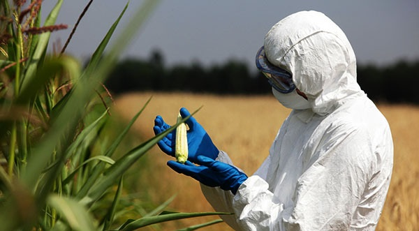 Monsanto Invests Over $125 Million to Change the DNA of Every Plant We Use For food