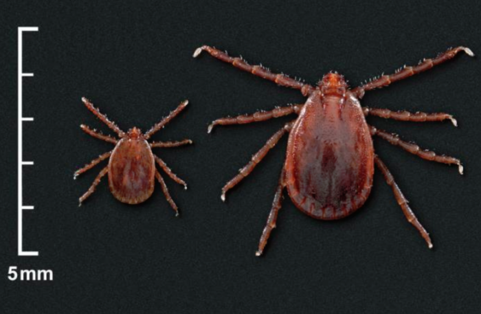 CDC Warns: 'We're Losing This Battle' With New Tick Species Capable Of Spreading Diseases To Humans