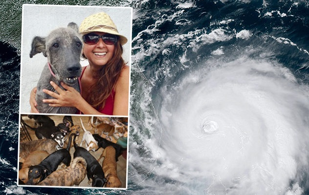 Woman in Bahamas saved 97 dogs by bringing them into her home ahead of hurricane Dorian making landfall