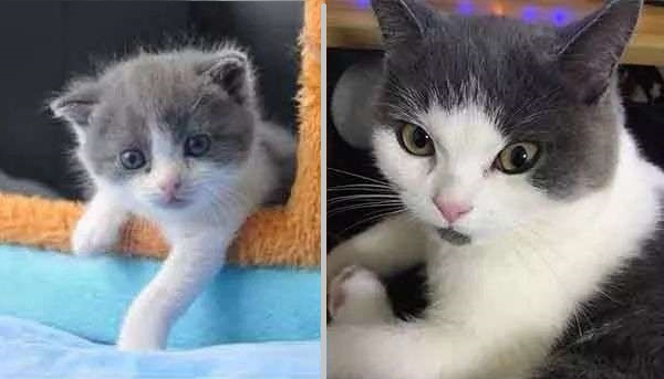 Copy-Cat: Chinese firm creates first cloned kitten (Video)