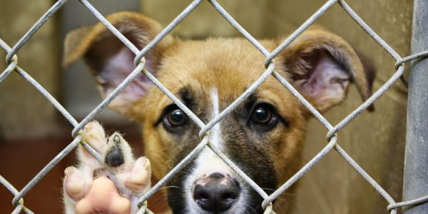 House unanimously passes bill making animal cruelty a federal felony