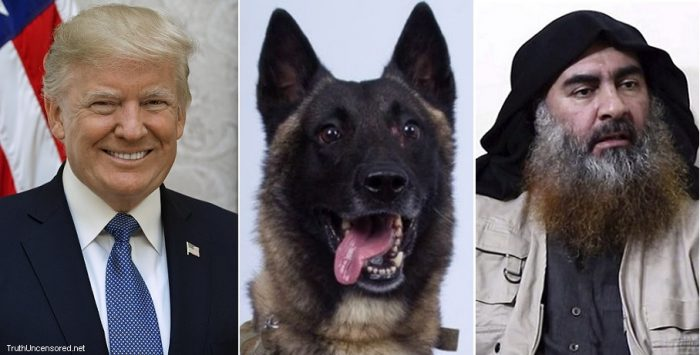 Trump tweets declassified photo of heroic Belgian Malinois dog who chased down Baghdadi